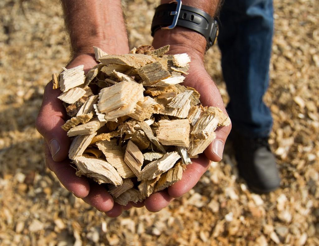 Duurzaam met Biomassa